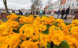 Blühende Innenstadt in Heide